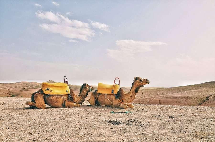 boda en el desierto con camellos