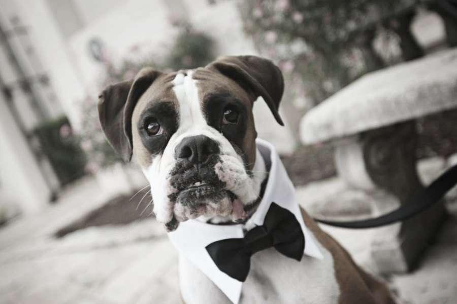 Mi mejor amigo en mi boda